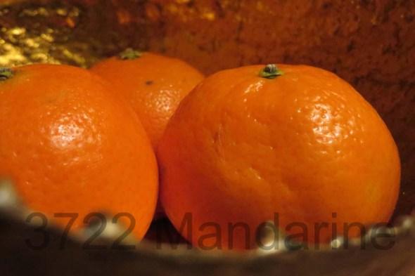 Mandarinen vor Gold