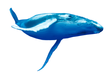 Transparent Background Humpback Whale Png 4