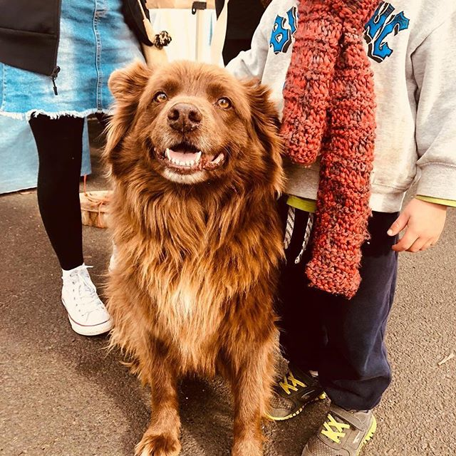 @dogsofwarragulfarmersmarket ・・・ 🐶 HELLO CHARLIE BROWN 🐶 How adorable is he?!? Helping his big and little hoomans at @warragulfarmersmarket today! One of very few dogs we saw at this@winter market. He was strutting his stuff and didn't let the chill get in his way.