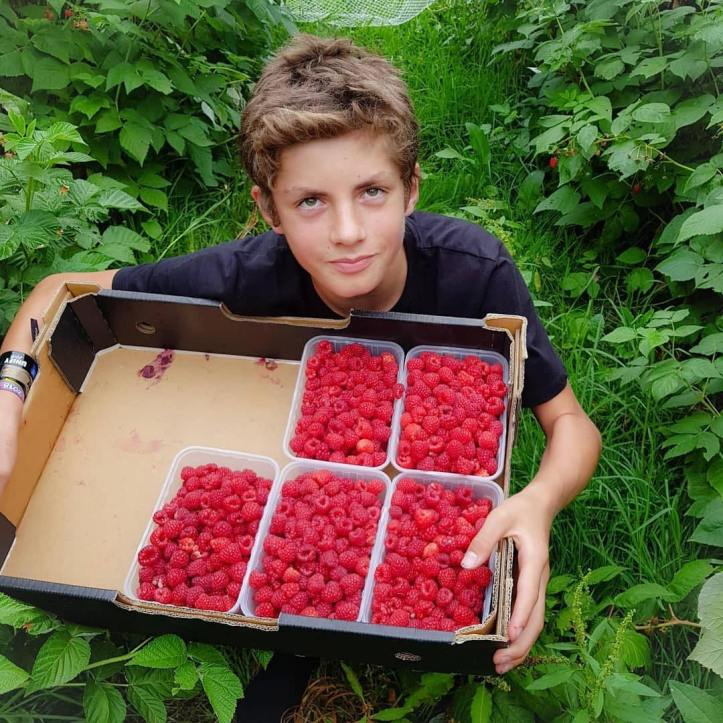 Look out for these delicious raspberries tomorrow from @flemingberries @flemingberries ・・・ My helper is with me today