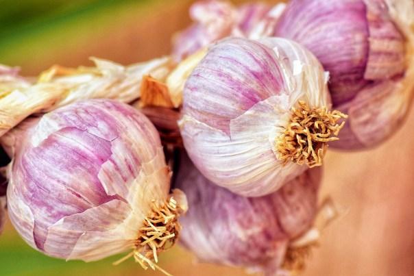 soft neck garlic