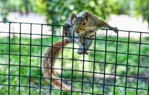 Battery Park Squirrel