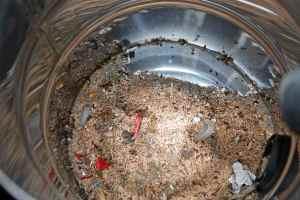 Dead Ants, Dead Ants...