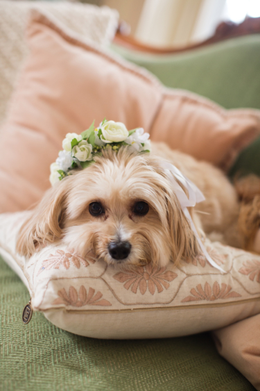 Bride's Dog with Floral Collar
