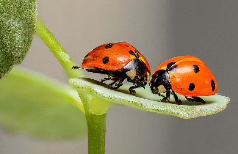 How to deal with bugs when maintaining the garden
