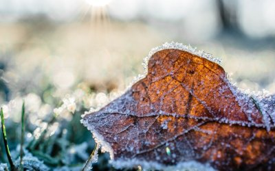 5 ways to prepare your garden for winter