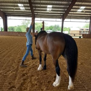 Yoga with Horses at Equest