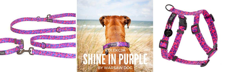 Shine-in-Purple-SLIDER