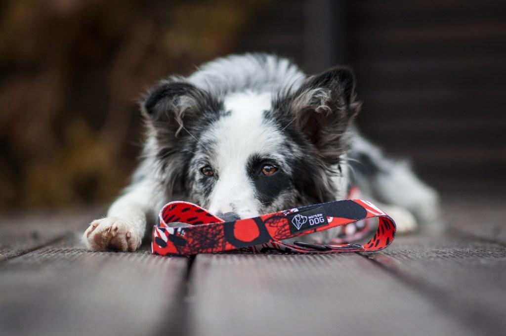 smycz miejska dla psa czerwona rebel warsaw dog
