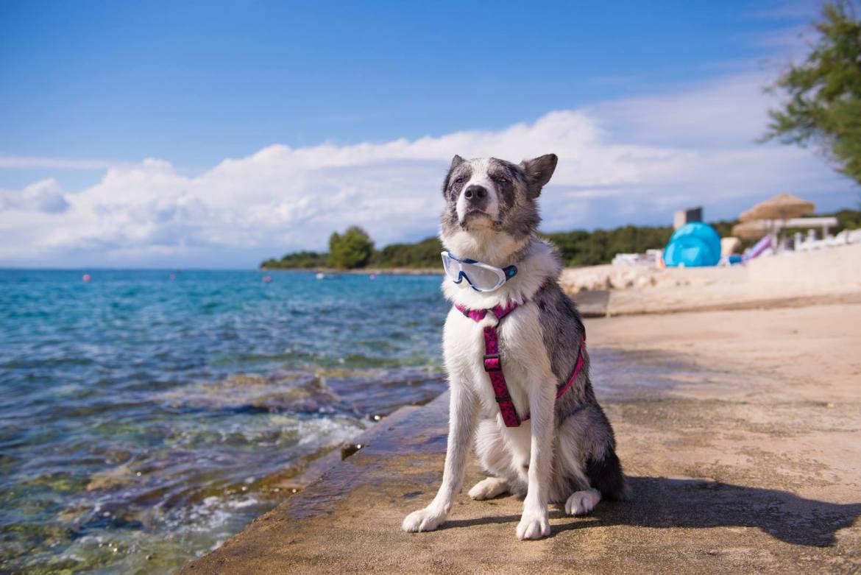 Podróż z psem na urlop. Jakie akcesoria są niezbędne przy transporcie psa?