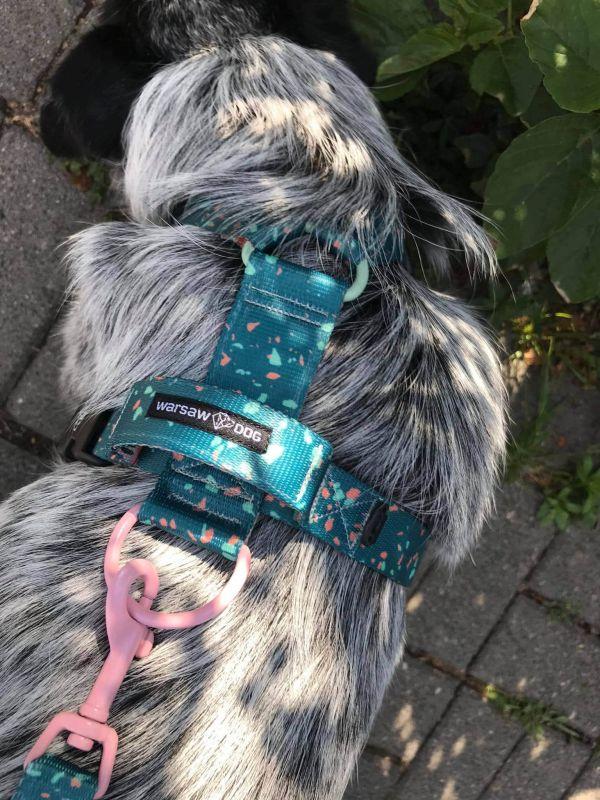 smycz szelki kolorowe terrazzo zielone warsaw dog
