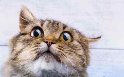 Raketa Hamasu vyplašila Izraelskú mačku ! -video-