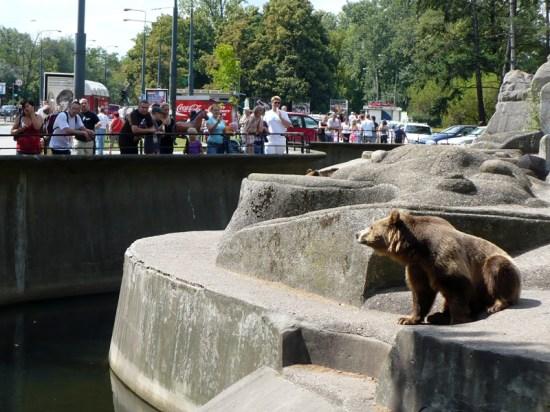 Mężczyzna wbiegł na wybieg dla niedźwiedzi i… zaczepiał je | Warszawa W Pigułce