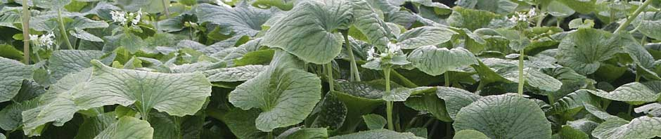 Click here to join Wasabi Growers Club and find out how to overcome Time Constraints.