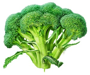 Broccoli every day may increase your life span