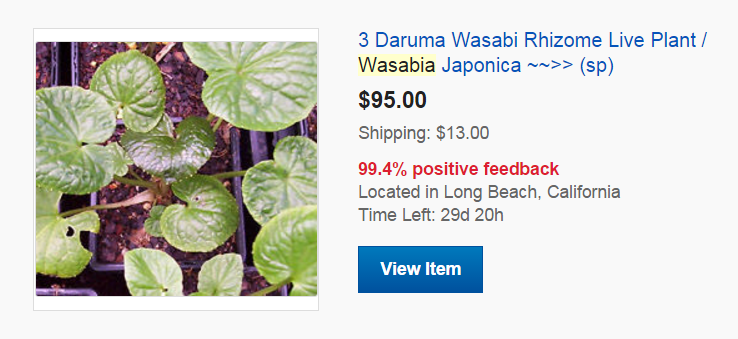 Buying Wasabi Plants - 3 Plants