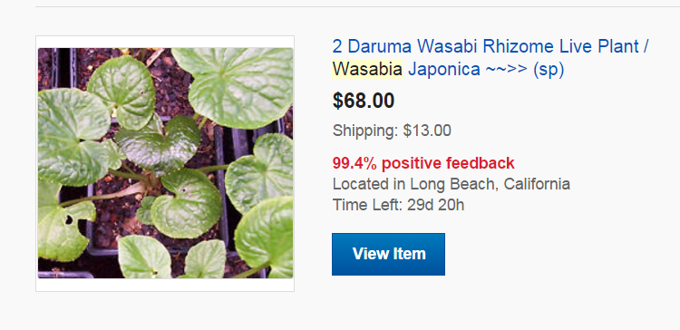 Buying Wasabi Plants - 2 plants