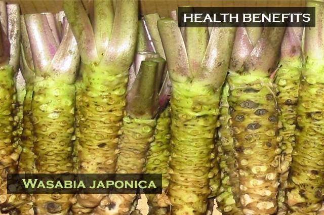 Health Benefits of Wasabia japonica rhizomes