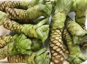 These are true Wasabi rhizomes.