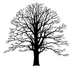 Who produced the first Tree of Life?