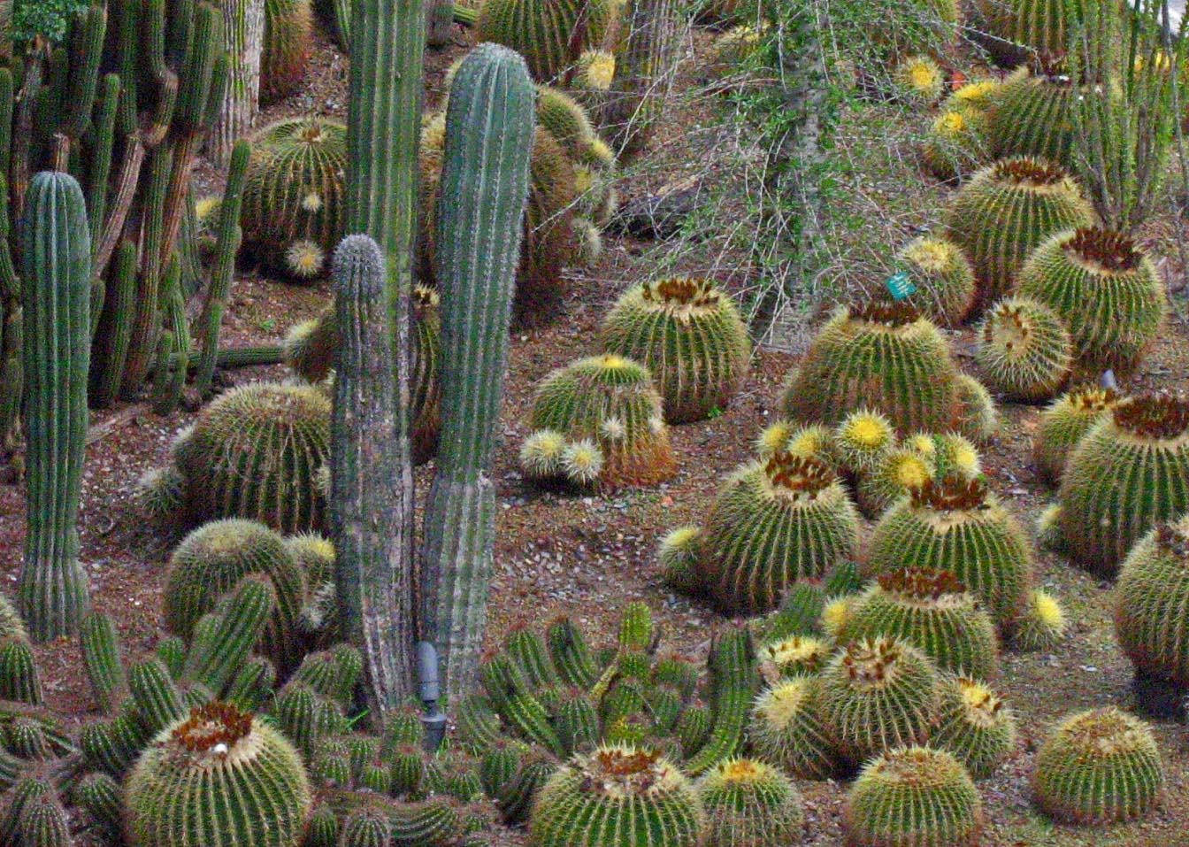 _cactus