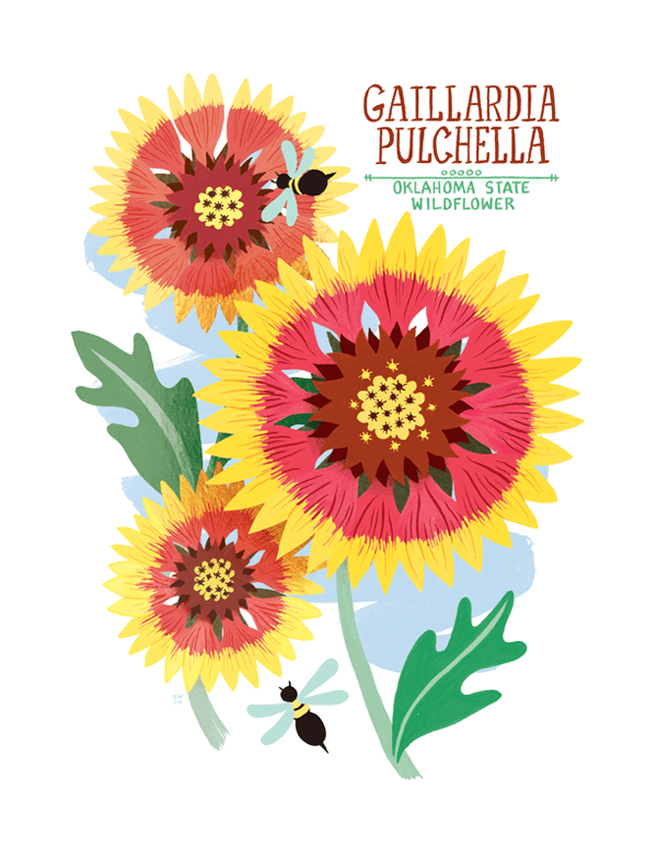 Illustration of one of Oklahoma's state symbols, the wildflower known as the gaillardia pulchella or Indian Blanket