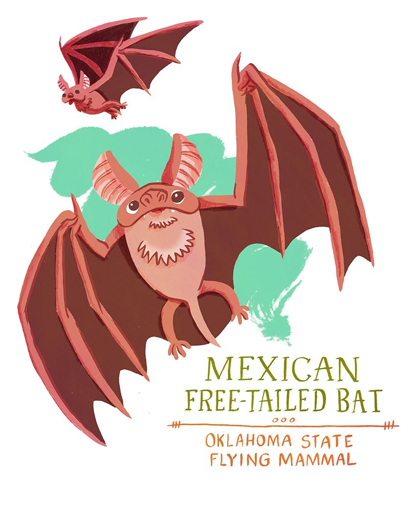 Mexican Free-tailed Bat: Oklahoma State Symbols