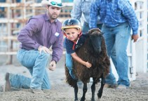 Mutton Buster Colson Nicolas Friday Night Rodeo