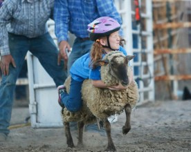 Cowboy 5K Mutton Buster Hailey Jackson Friday Rodeo