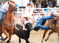 Steer wrestler Jeff Richardson leaps from his horse to the back of the steer Saturday night rodeo
