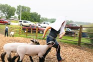 Shelby Wachter makes her way to the show ring during a rain shower.
