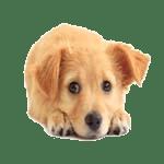 DOG LICENSES