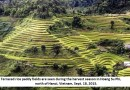 Vietnam rice industry faces threat from climate change, Mekong dams