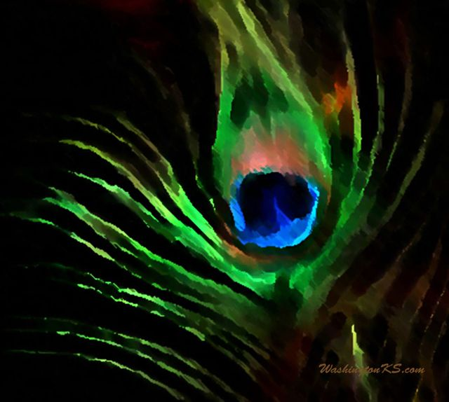 Desktop Backgrounds Peacock Feather