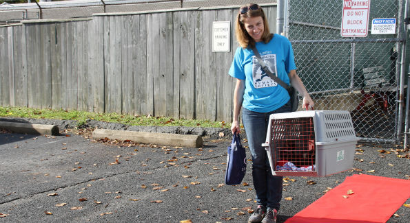 A WHS volunteer walks two kittens down the red carpet (photo by Catherine Trifiletti).