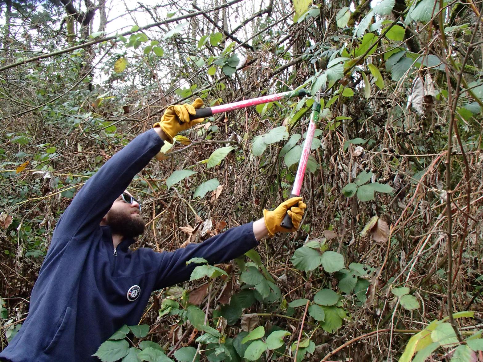 WSC member Josef removing blackberry bushes with a lopper