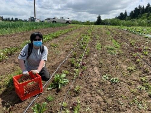 WSC member Kecen harvesting on a community farm in SW Washington