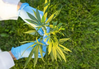 Permissible Drug Delta-8 From Marijuana Receives A Rush In Consumers