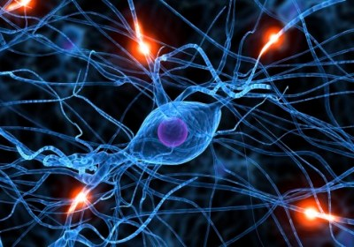 Researchers Examine Data On Well-Known Toxins Suspected Of Causing Neurodegeneration