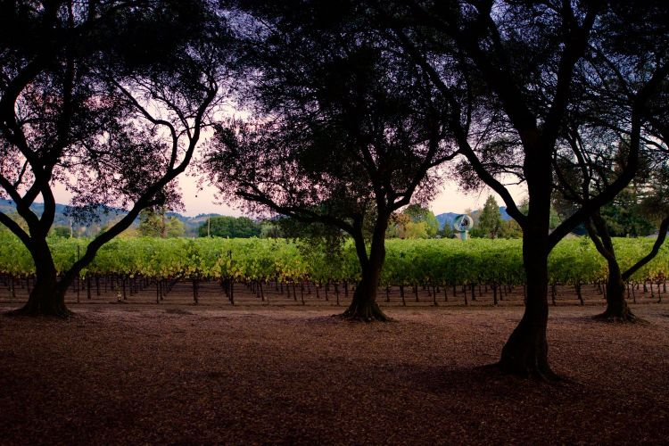 New Names, New Wines from Napa