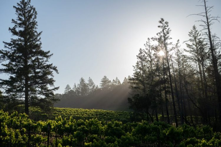 Forging a New View of Sonoma Valley: Introducing Gail Wines