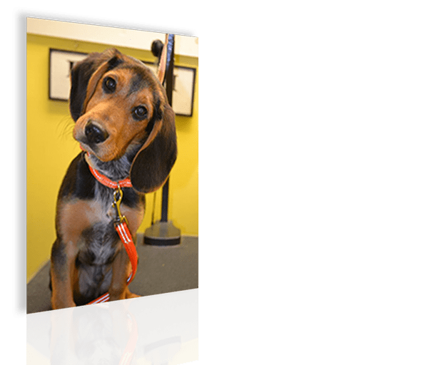 Self serve dog wash houston tx the best dog 2018 a self serve dog wash makes splash dirty focuses solutioingenieria Choice Image