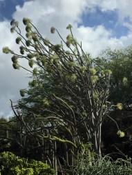 Kapiolani Community College/Botanical Garden