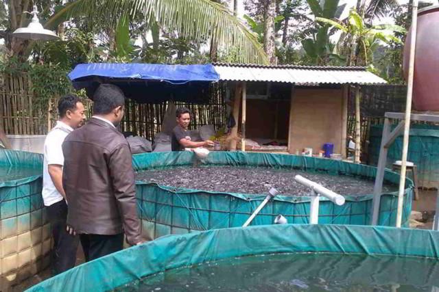 Panduan lengkap Budidaya Ikan Lele di Kolam Terpal