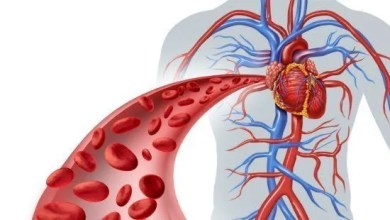 Photo of د انسان د وینی دوراني سيسټم (Blood Circulatory System)