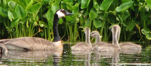 Hastings Lake June 2007