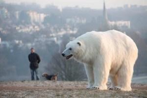 كبد الحيوان - دب القطب الجنوبي