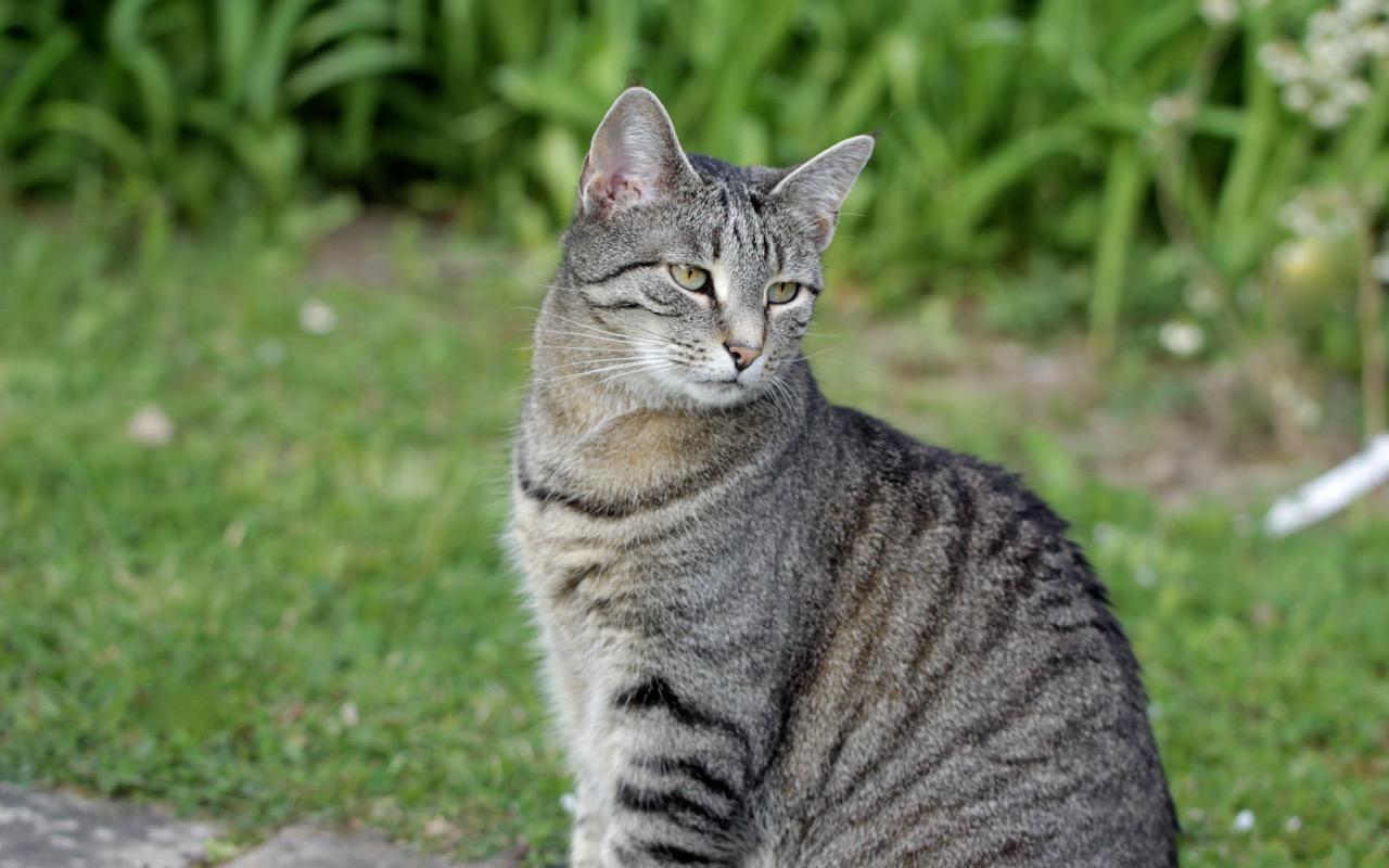 Katzen Garten Vertreiben Gegen Maulwurf Garten Tun Was Tun Gegen