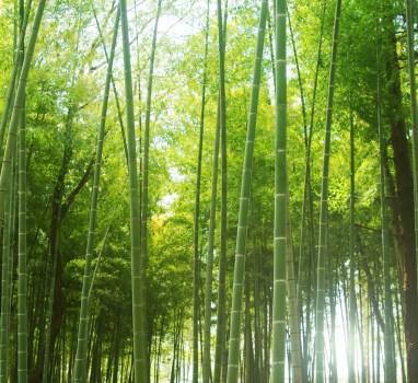 竹のようにまっすぐ