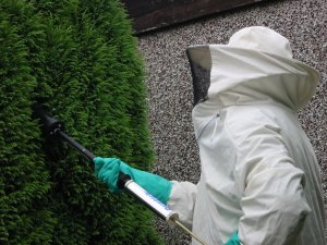 treating a wasp nest 300x225 - Wasps Nest Treatment